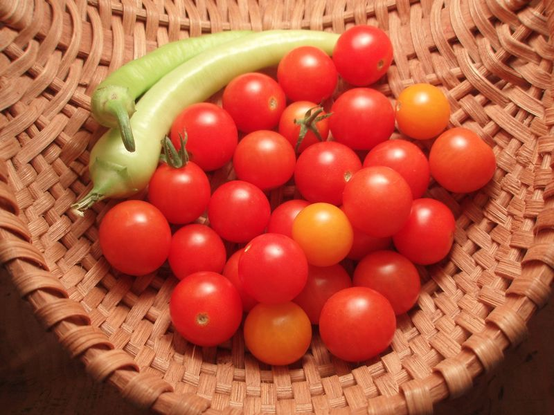 Tomatoes test